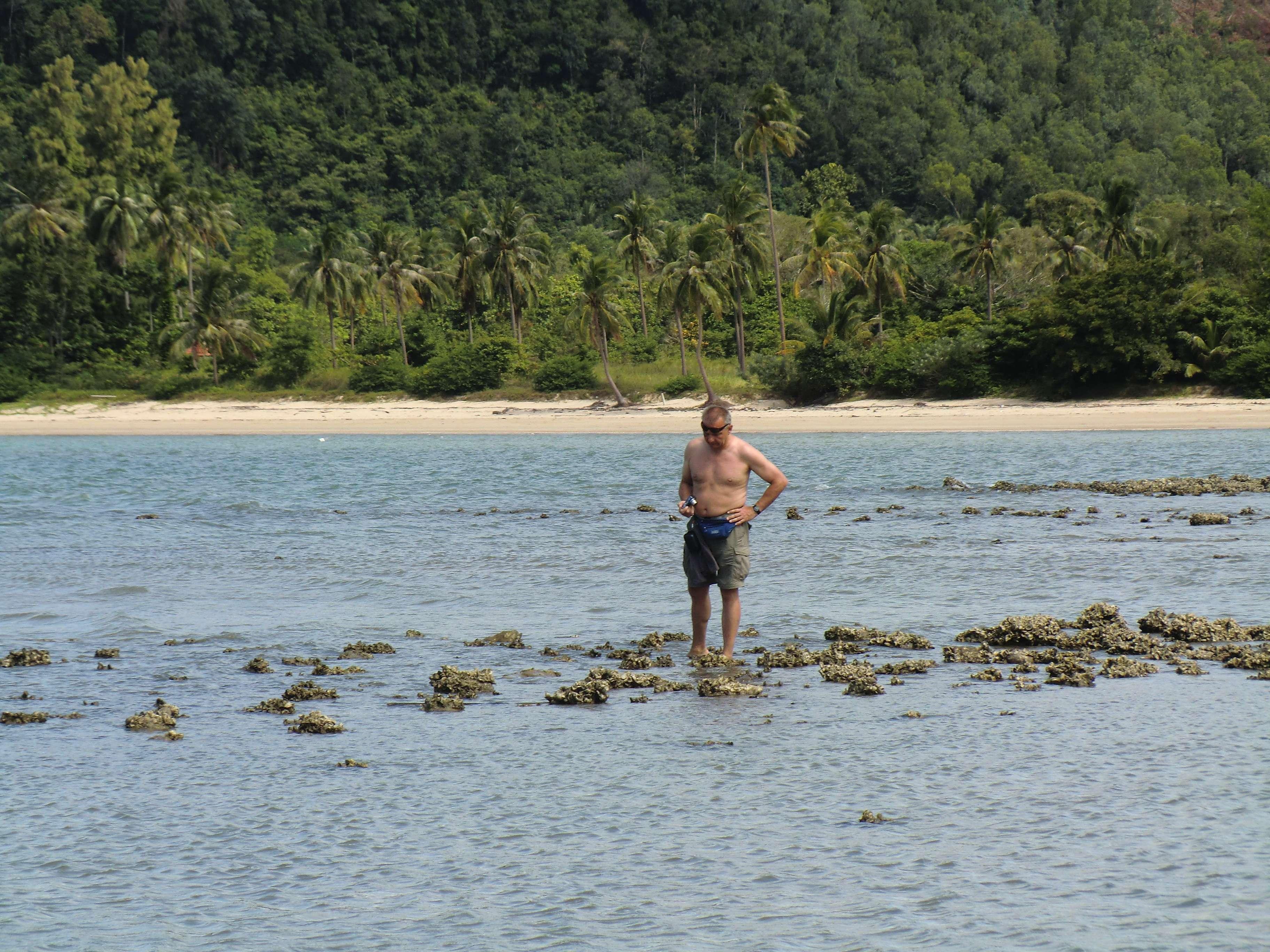 Ralle auf der Suche nach Fischen....